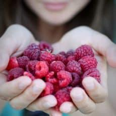 Raspberries being held by two hands