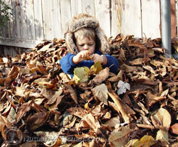 A small child sitting in a pile of dry leaves