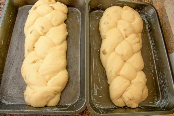 Two greased pans of risen Portuguese Easter bread