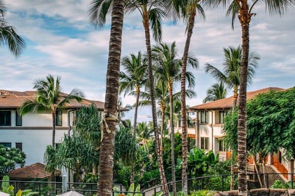 Maui 2015-2