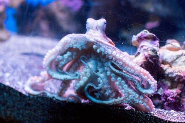 A close up of an octopus