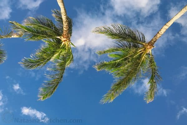 The sky and the tops of palm trees