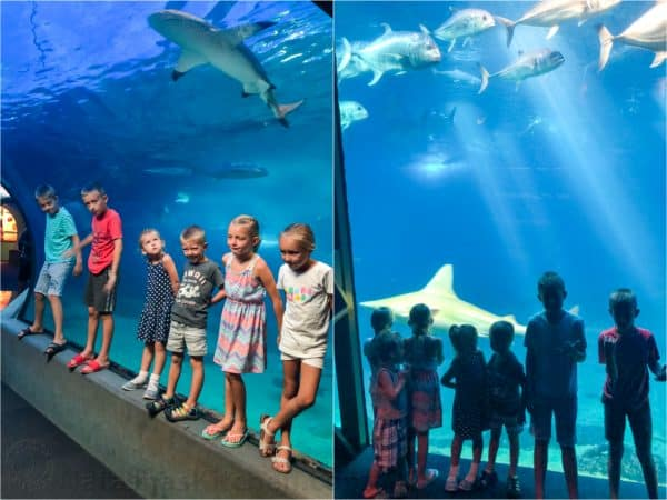 A group of children standing in front of an aquarium